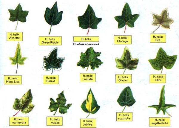 Фэн шуй и комнатные растения 8 мифов